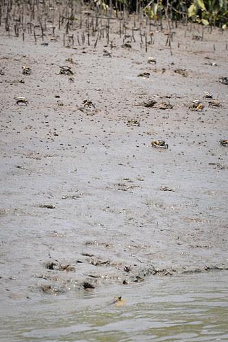 CrabsandMudskipper