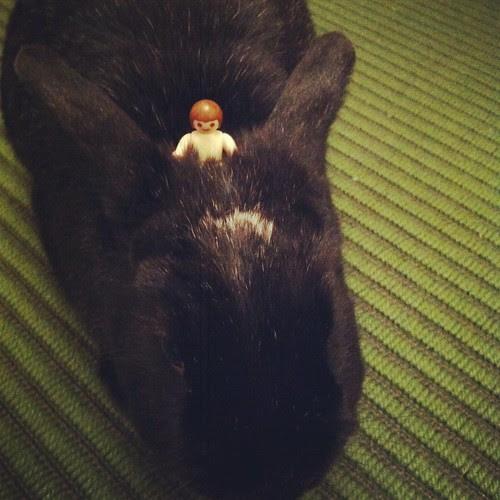Prince of Peace arrives on a bun