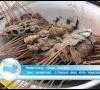 Nasi Grombyang, Cita Rasa Khas Pemalang Selalu Full Pengunjung