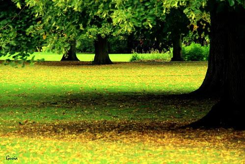 September in the park