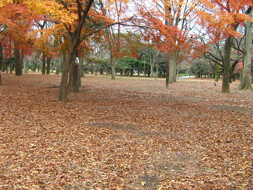 Red leaves carpeting the ground at Yoyogi Park