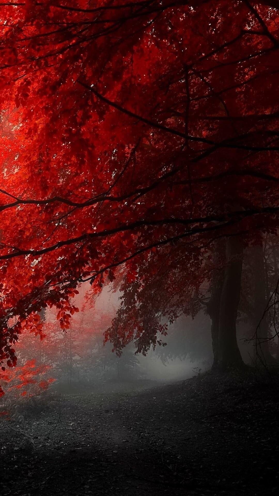 Unduh 77+ Wallpaper Black Red Iphone Terbaik
