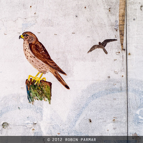 birds/freedom