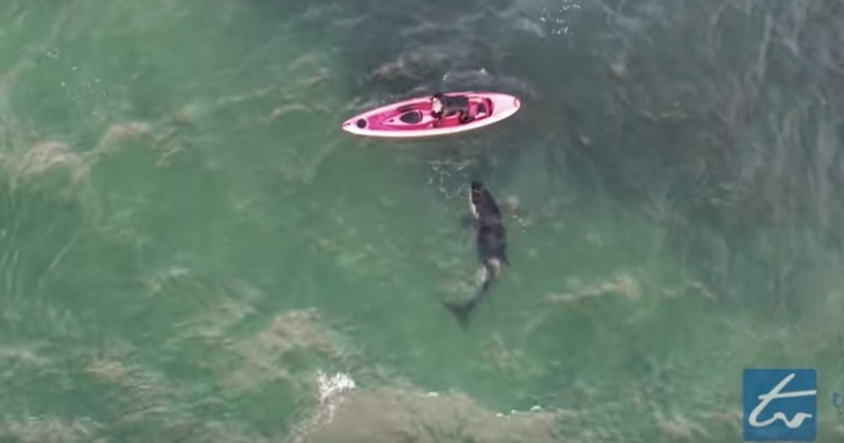 Drone registrou um maluco nadando e brincando de forma arriscada com uma orca selvagem