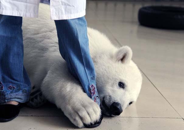 Οι 50 καλύτερες φωτογραφίες ζώων του 2012 (18)