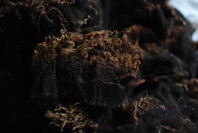Rooed Shetland x Jacob black lambswool fleece