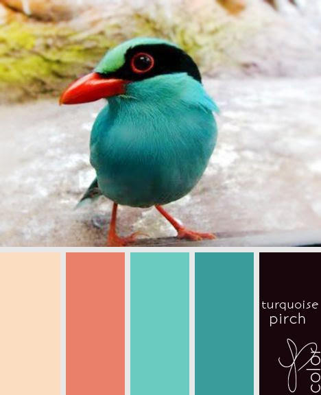 love teal and coral!!!