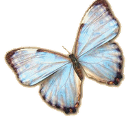 The Papillon...