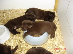 Mud's pups at 4 weeks