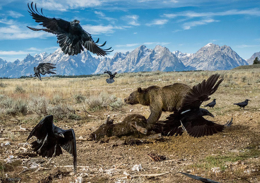 50 лучших фотографий года от National Geographic 5