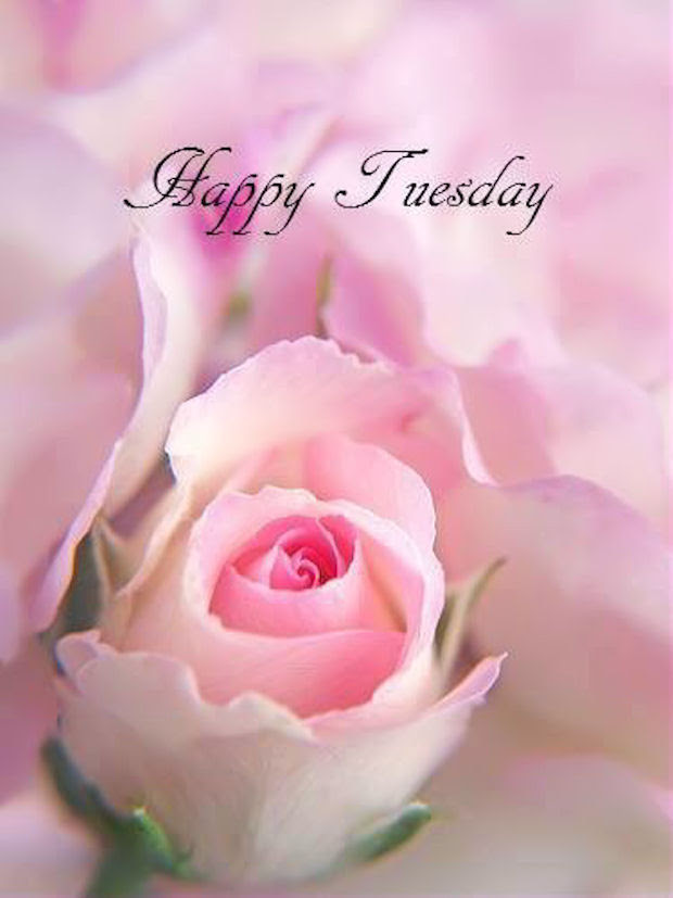 Happy Tuesday Quote With Rose Pictures Photos And Images For