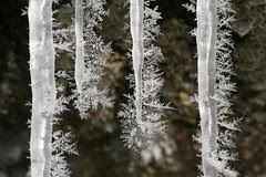 four-icicles-frost