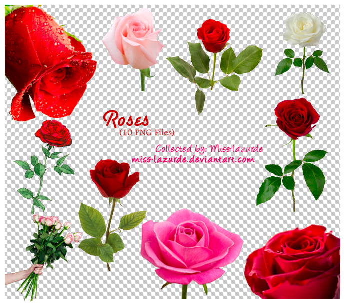Free Rose Png Download Free Clip Art Free Clip Art On Clipart Library