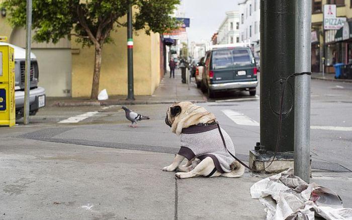 http://de.acidcow.com/pics/20090925/saddest_dog_02.jpg