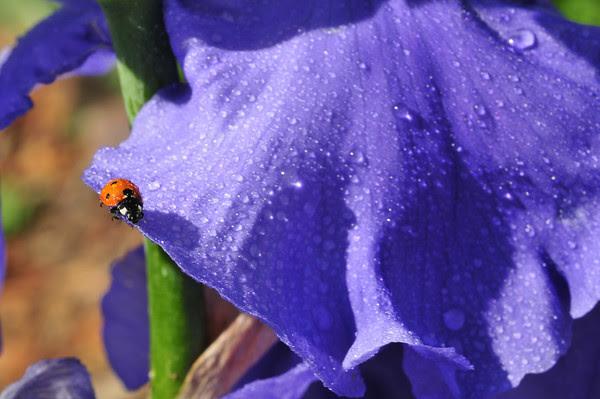 Ladybug Trail