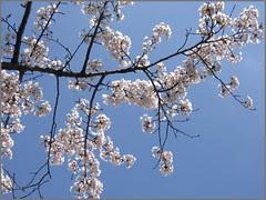 41 branch in sunshine