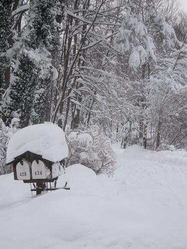 Snow boxes