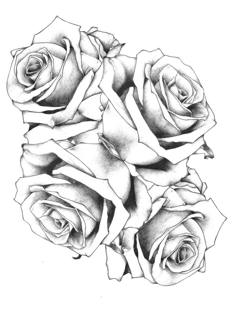 Black Roses Drawing At Getdrawingscom Free For Personal Use Black