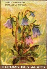 fleurs des champs 6