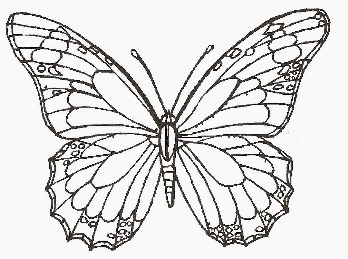 Free Line Drawings Of Butterflies Download Free Clip Art Free Clip