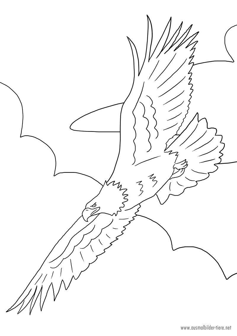 Adler zum Ausmalen