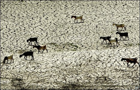 Sheep cross the parched Kouris reservoir during the 2007 drought