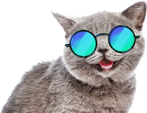 cat funny sunglasses summer fun meme freetoedit