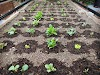 FarmBot automates tending, weeding, and watering a garden and makes it as easy as playing a video game to feed a family of 4 — here's how it works