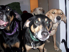 4dogs_112209