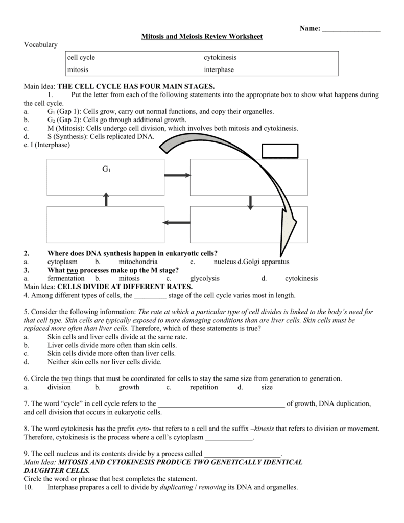 33 Holt Biology Cell Growth And Division Worksheet Answers ...