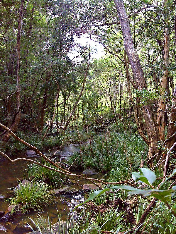 The Upper Caboolture River
