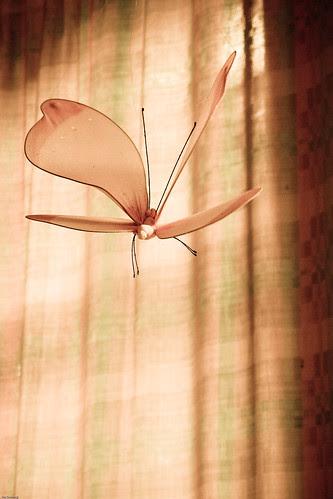 Fly away - {P6140290} (by X-it)