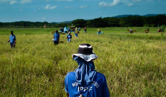 La prisión de Iwahig es la granja penal con mayor producción de Filipinas. Sus 26.000 hectáreas cuentan con arrozales, zonas de pesca, animales, el espeso manglar costero y una cadena montañosa,
