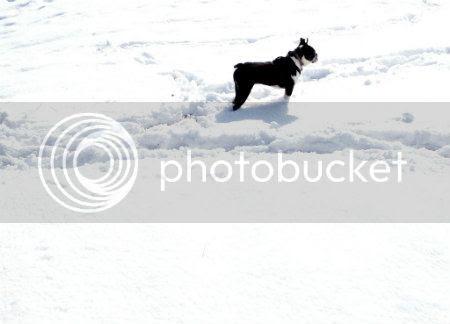 snowy rockie
