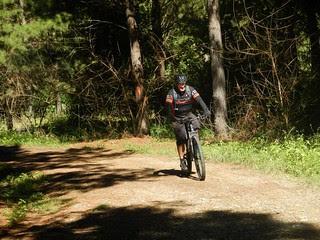 Hoop Pine forest