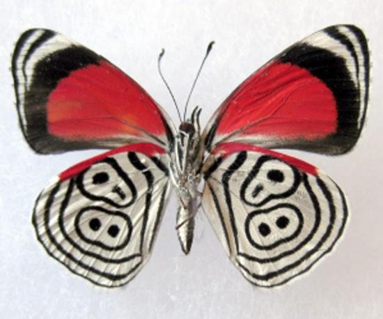 Butterfly 88 πεταλούδα με αριθμό 88