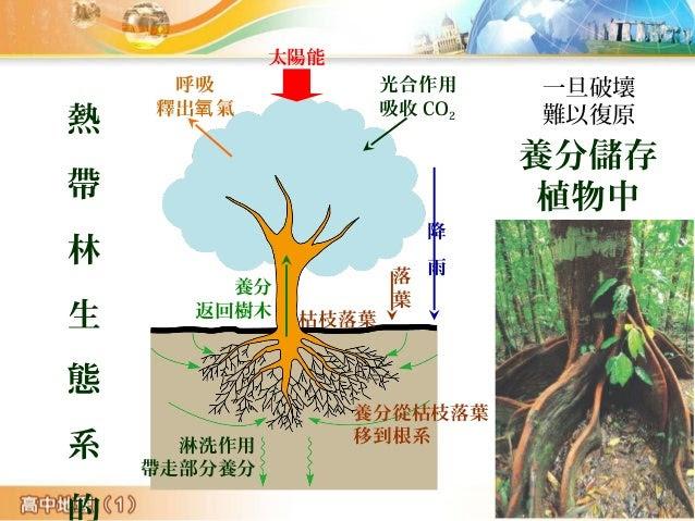 太陽能 光合作用 吸收 CO2 降 雨落 葉 呼吸 釋出 氣氧 養分 返回樹木 養分從枯枝落葉 移到根系 枯枝落葉 淋洗作用 帶走部分養分 熱 帶 林 生 態 系 一旦破壞 難以復原 養分儲存 植物中
