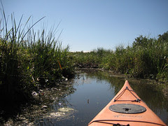 Parc de la Rivière-des-Mille-Îles, 11 September 2011, poking my bow into the marsh