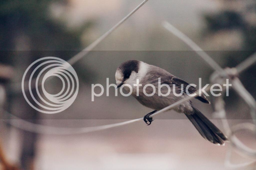 photo 014b8cd6279eb4107565af7f8653c1999045f69a20.jpg