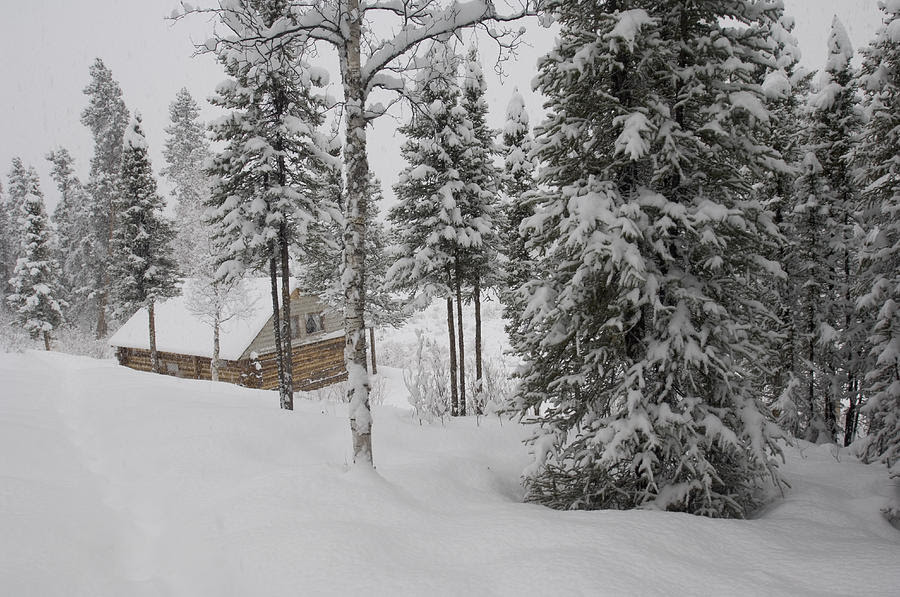 Log Cabin In Wilderness Alaska  Alaska Guide
