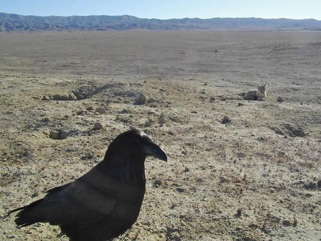 raven visit