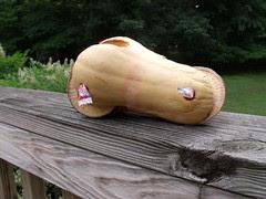 butternut racer by Teckelcar
