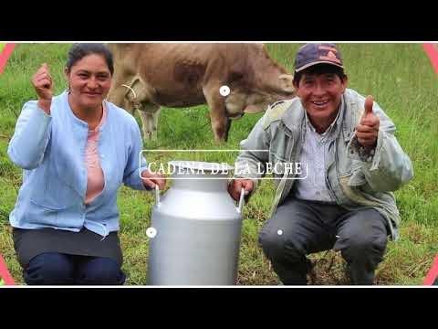 Cajamarca: cadenas productivas de palta, café, arroz, acuícola, leche y derivados lácteos. Video