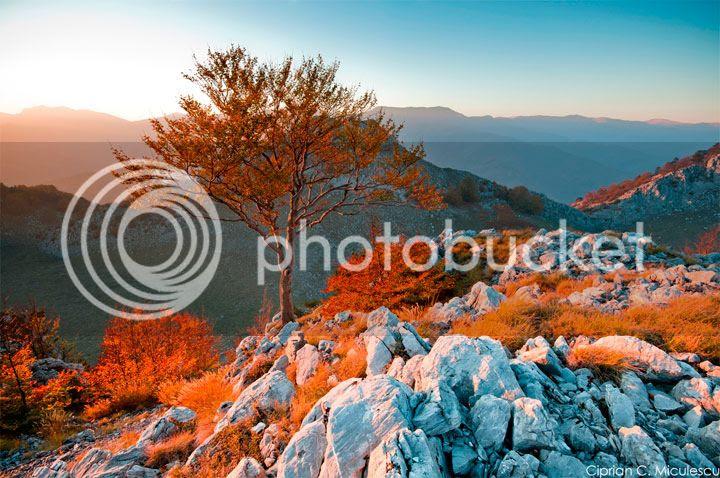 photo Ciprian-Miculescu-4_zpswd1of7fq.jpg