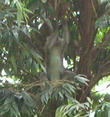 Monkeys spotted at Yishun Park_c_020106