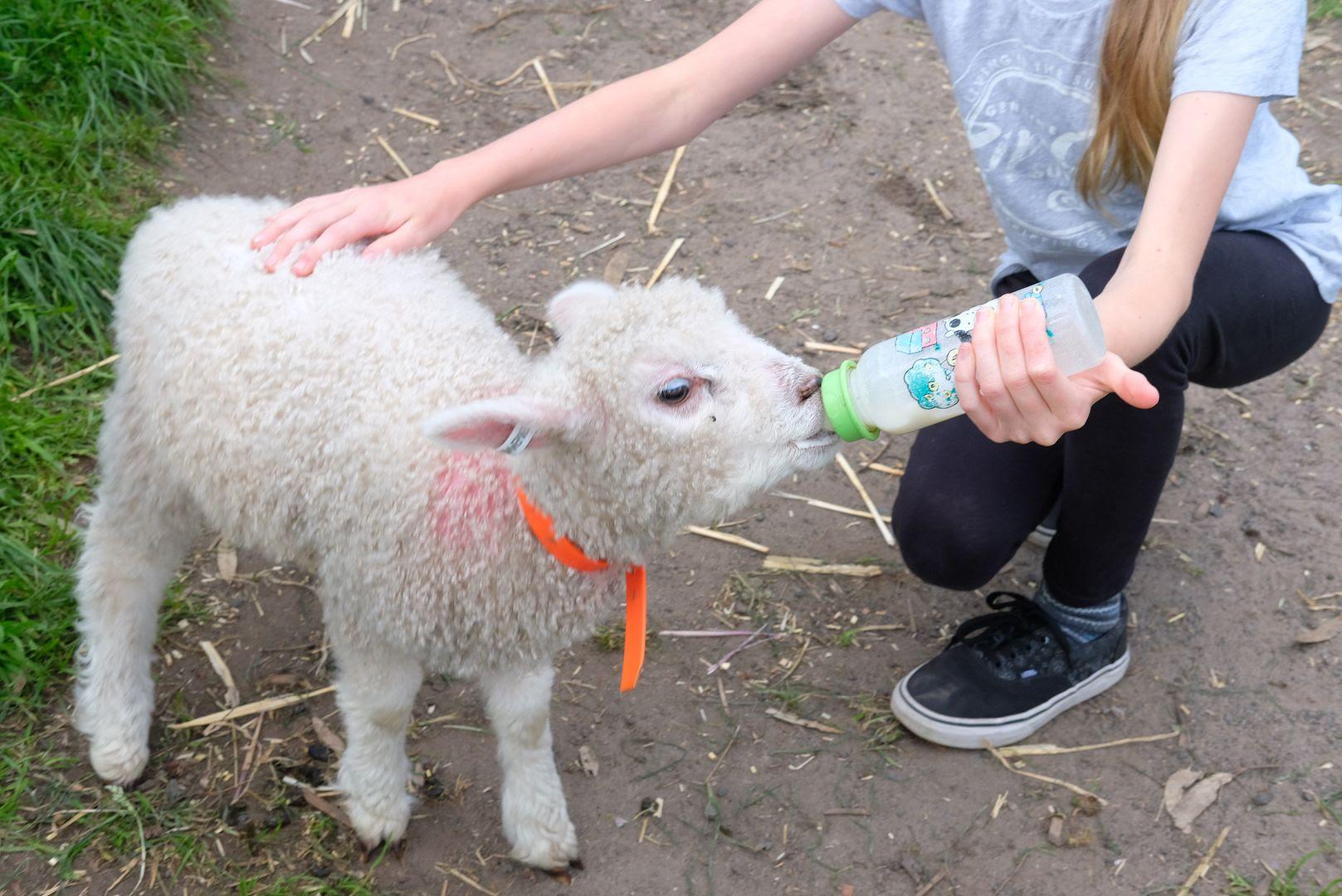 photo Collingwood Childrens Farm 11.jpg