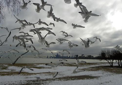 Chicago Montrose Harbor 1.3.2010 (14)
