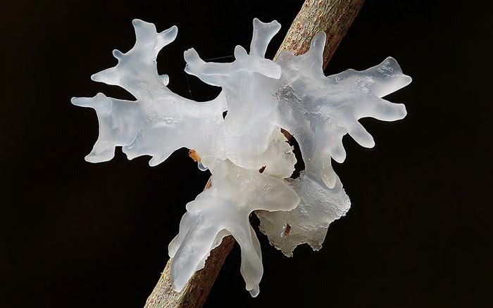 photos of mushrooms