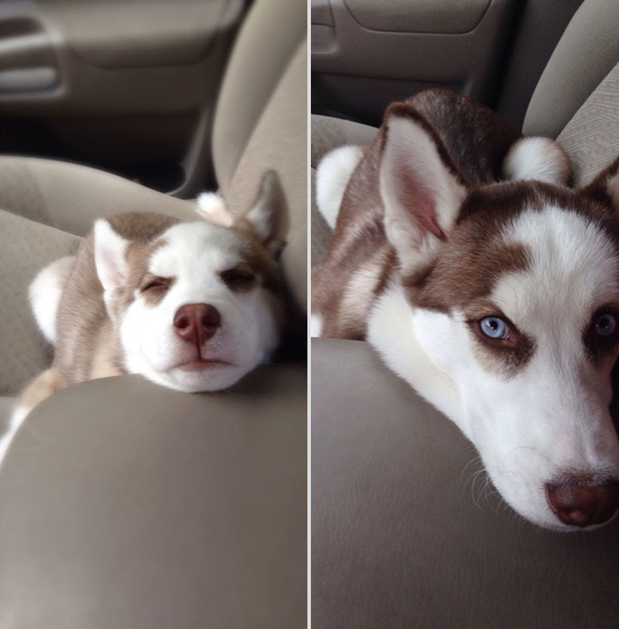 pets-before-after-1