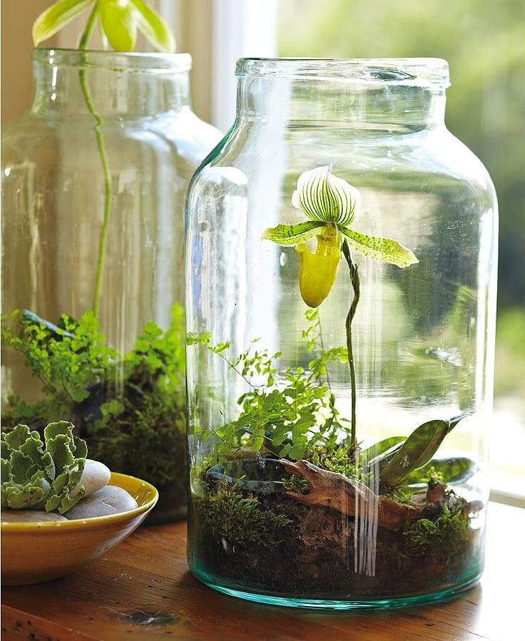 Jar Garden